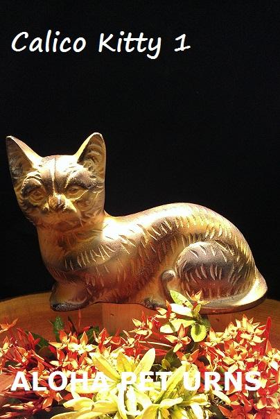 verona street animal shelter cats